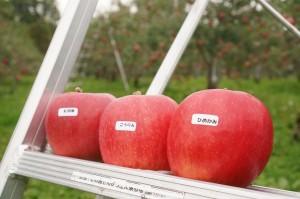 りんご狩りに行ったときのりんごのもぎ方