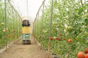 北海道北見瀬野農園